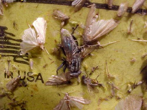 Control Insectos Voladores